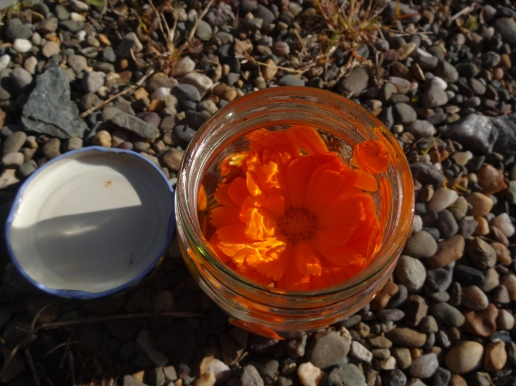 marigold in a jar infused oils
