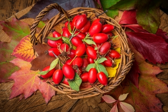 basket with rosehips